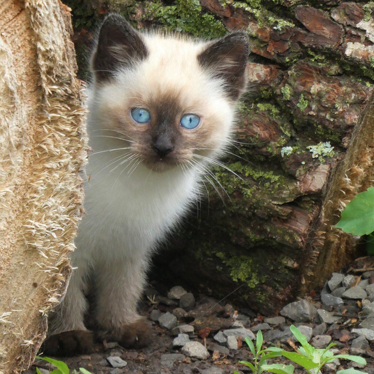 In the backyard photography - barn kitten