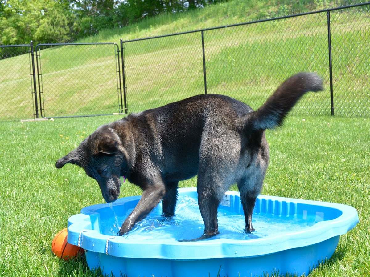 In the backyard photography - dog in pool