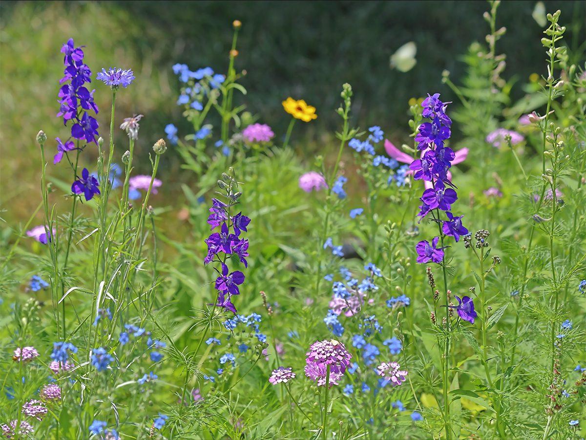 In the backyard photography - wildflower garden