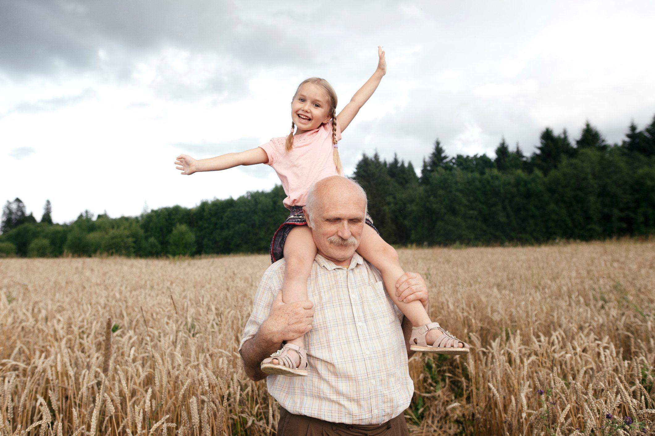 Portrait of happy little girl on grandfather's shoulders in an oat field