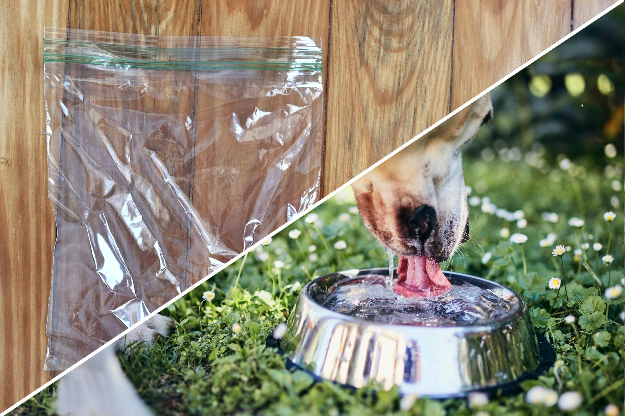waterbowl dog plastic bag uses reusable life hacks