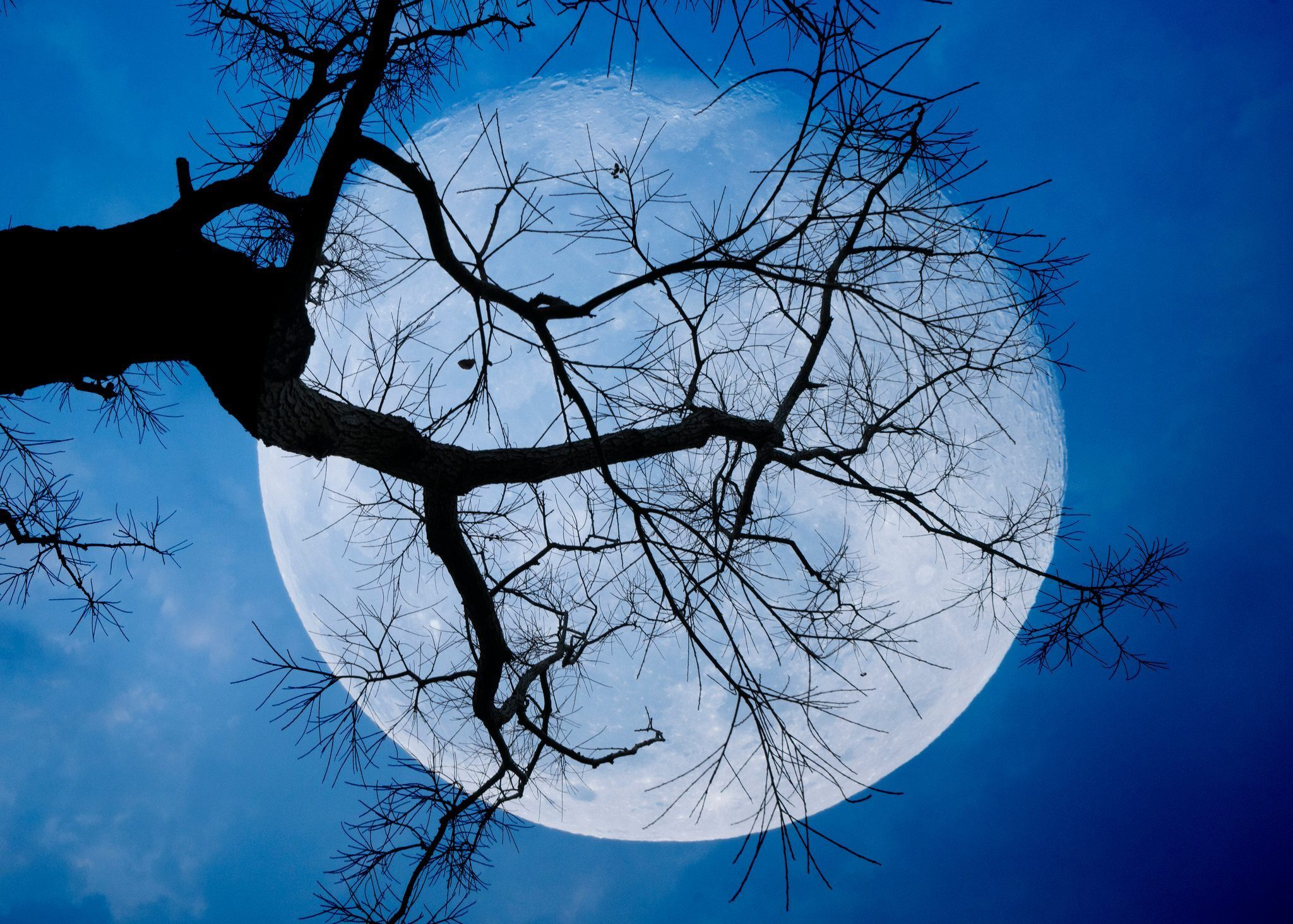 Full moon between branches with blue sky in background