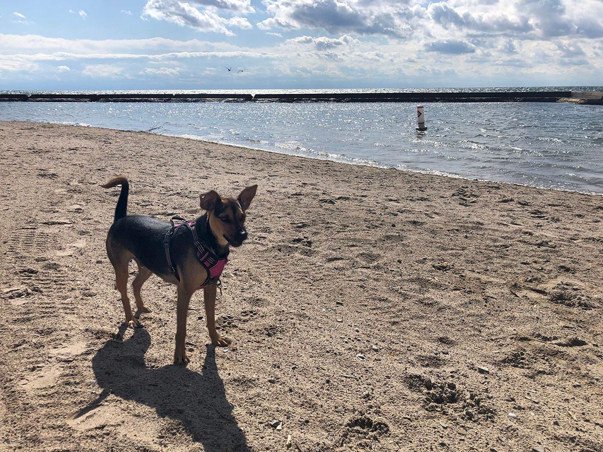 Pandemic Puppy on Beach