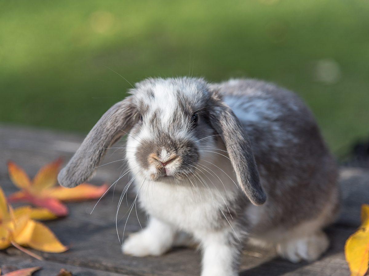 Best pet according to your zodiac - bunny