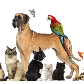 Best pet according to your zodiac - group of pets