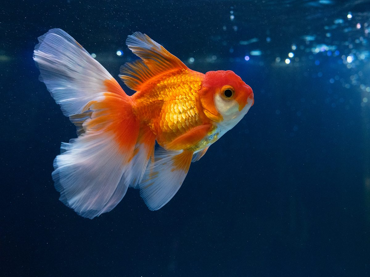 Best pet according to your zodiac -