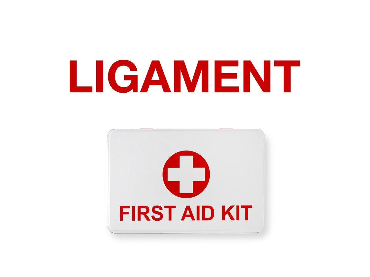 First aid terms - Ligament