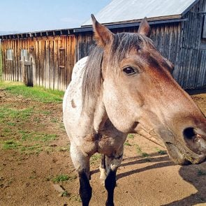 A roan horse named Roany - saying goodbye to animals