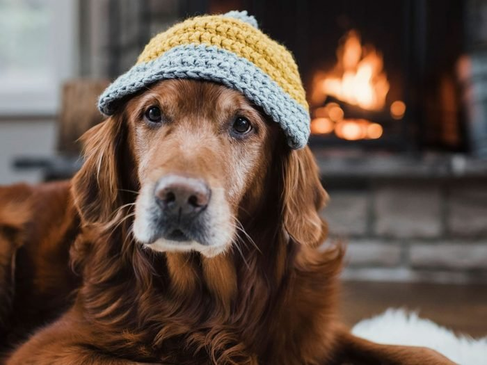 Best house temperature for pet - Dog in hat by fireplace