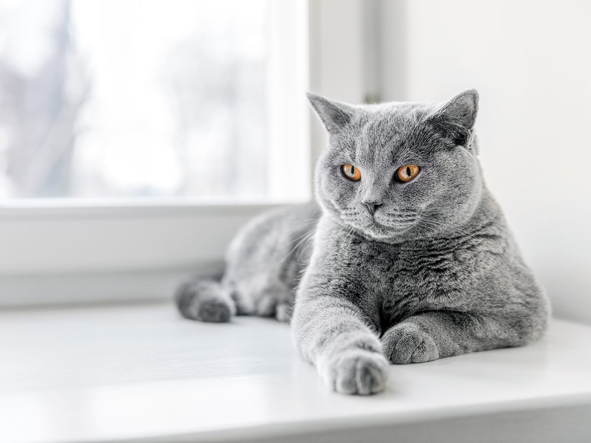Best house temperature for your pet - Cat on window sill