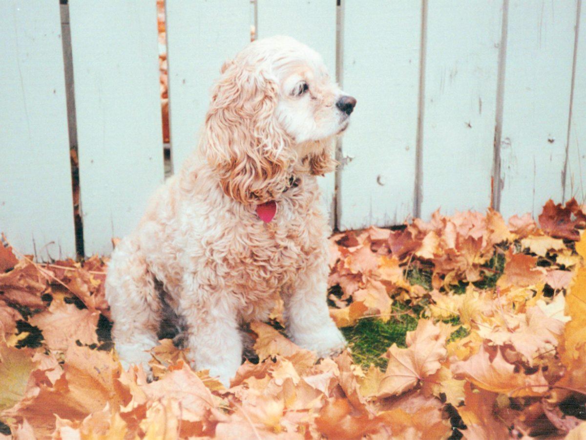 My dogs chose me - Kayla