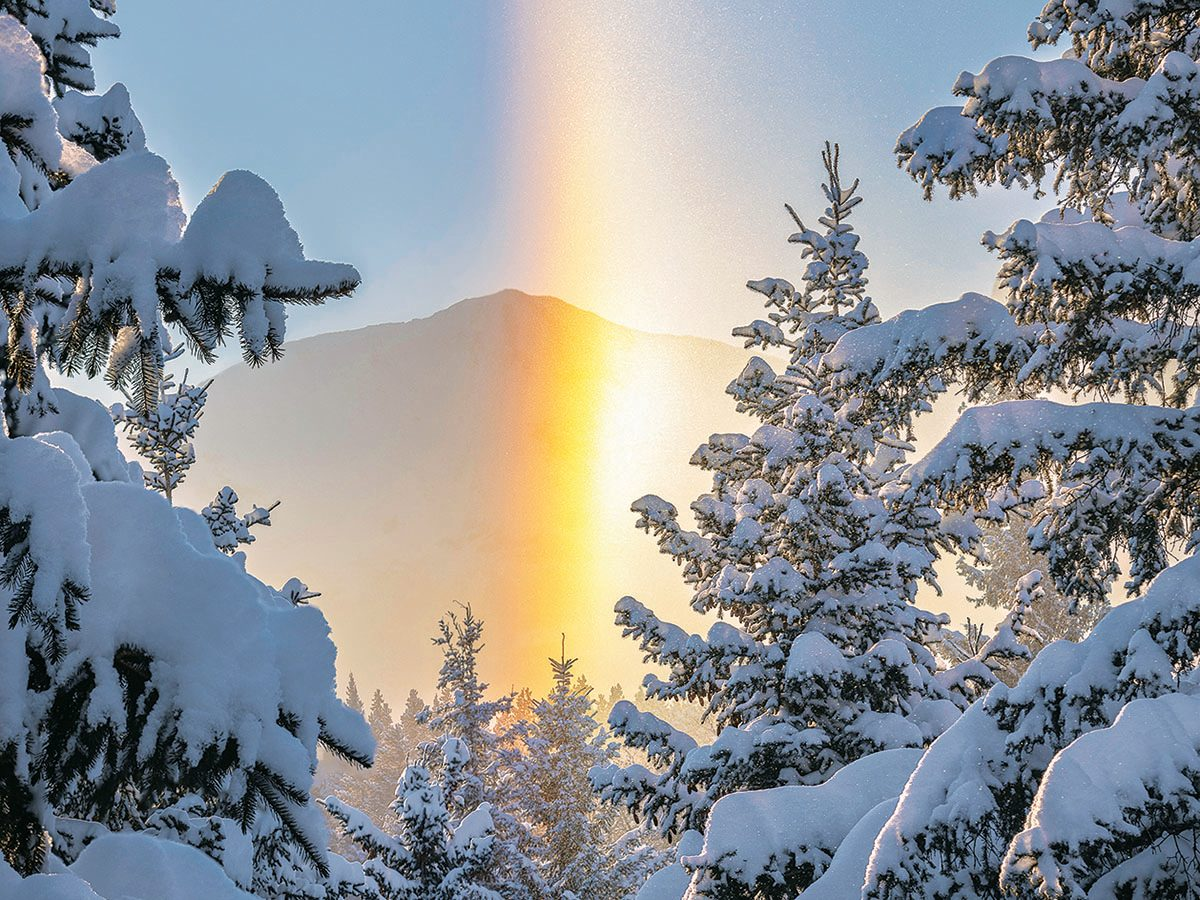 Snowy trees morning sunrise.