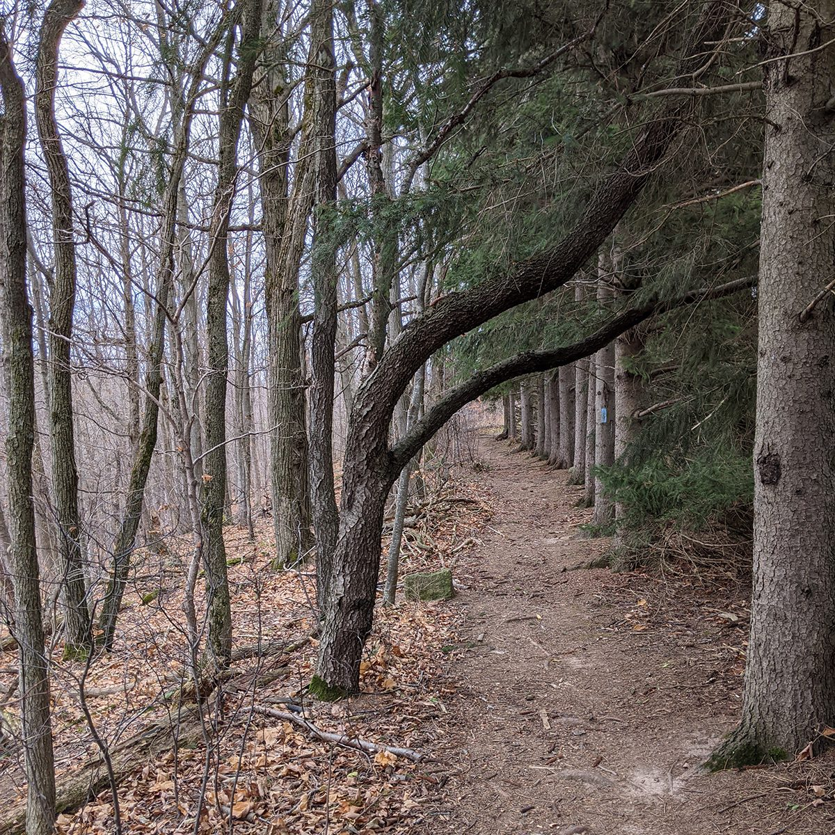 My Happy Place - Hiking Trail