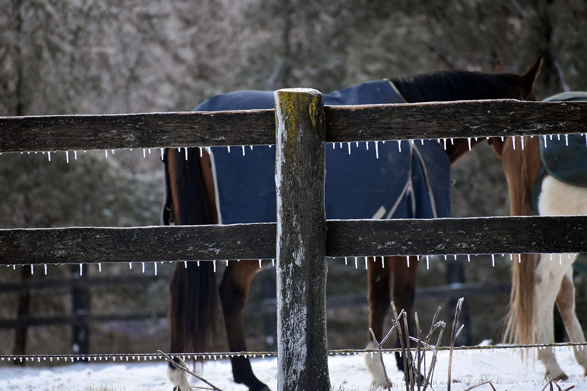 My Happy Place - Horse Stable In Winter