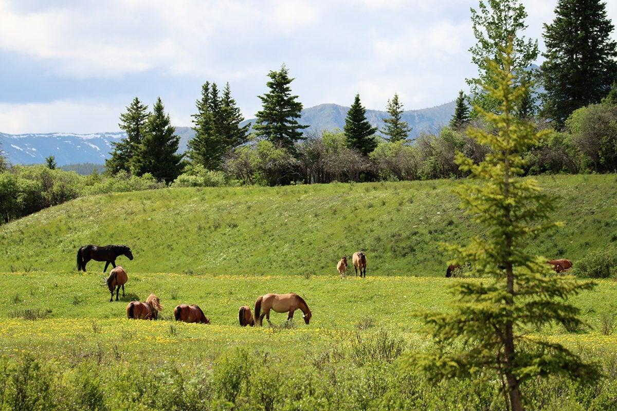 My Happy Place - Horses In Alberta