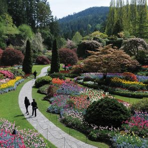 Botanical gardens across Canada - The Butchart Gardens Botanical Gardens