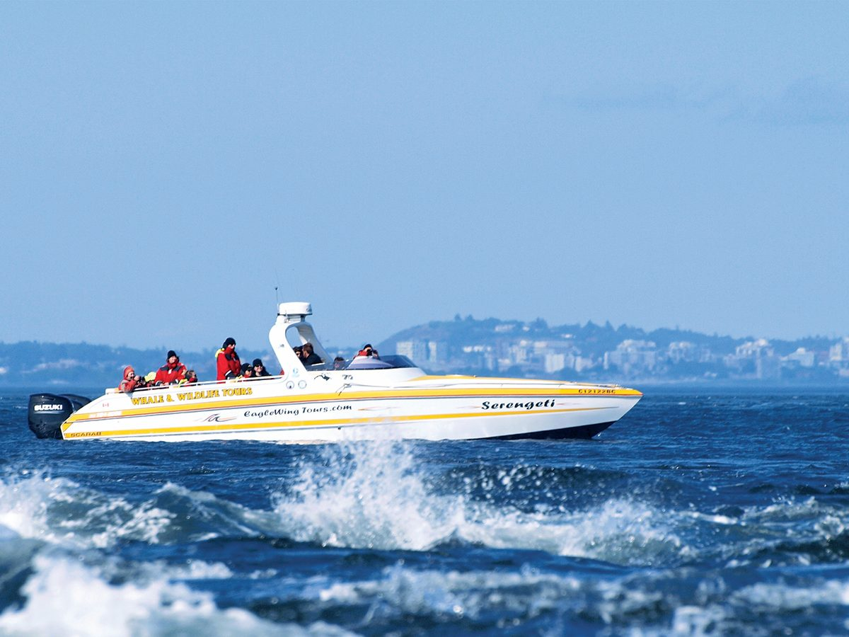 Victoria attractions - whale watching excursion