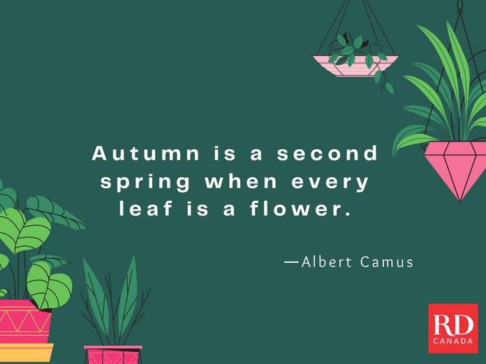 Short Inspirational Quotes - Albert Camus