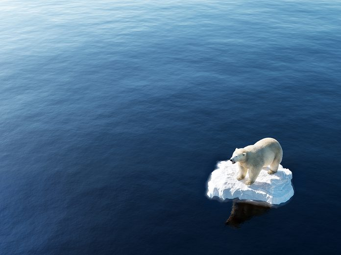 Earth Day Quiz - Climate Change Polar Bear on Melting Ice Caps