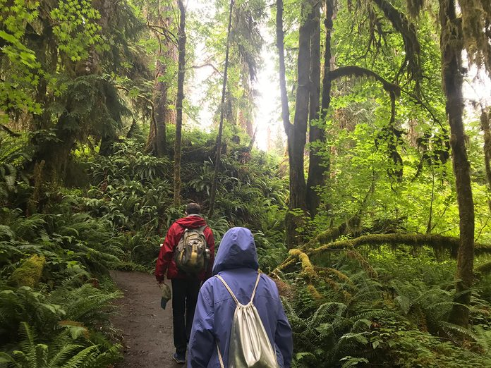 Earth Day Quiz - Forest Bathing