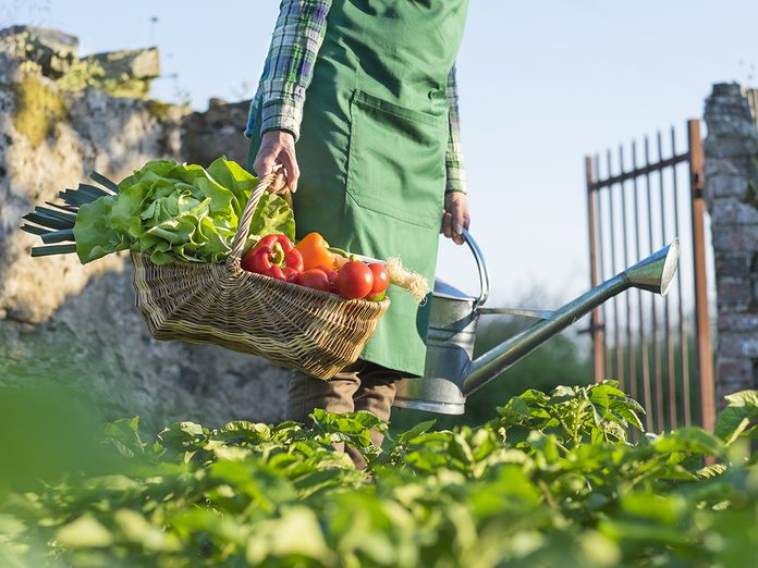 A woman carrying a basket of fresh vegetables in garden