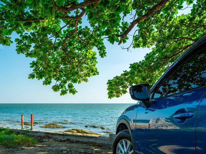 Car parked under leafy tree