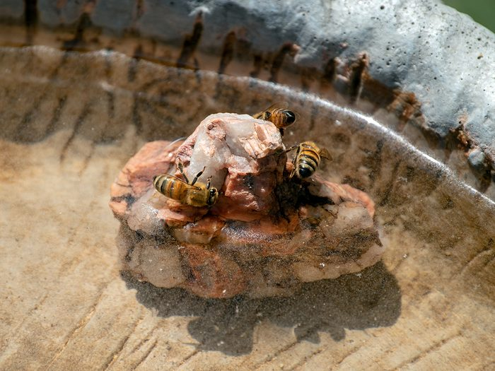 Save the bees - honeybees drinking water