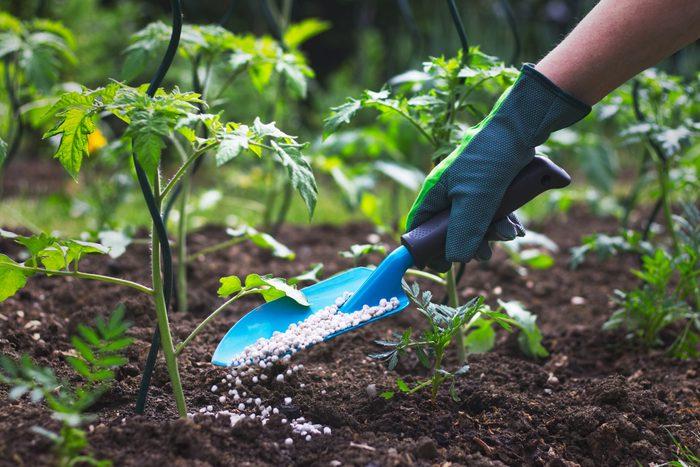 Gardening tips - Hand in glove holding shovel and fertilize seedling in organic garden