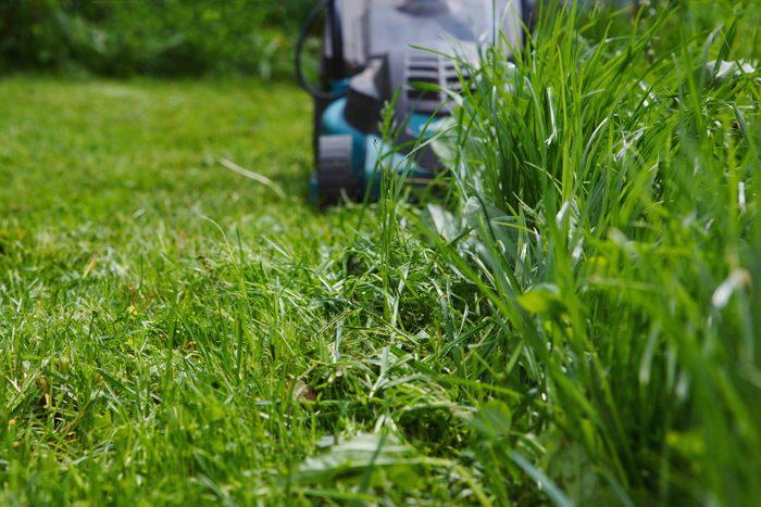 Attracting mosquitoes - Yard debris
