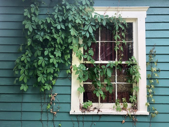 How to cool down a room without AC - vines climbing up side of house
