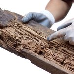 7 Signs You Might Have a Termite Infestation