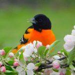 Incredible Bird Photography From Across Canada
