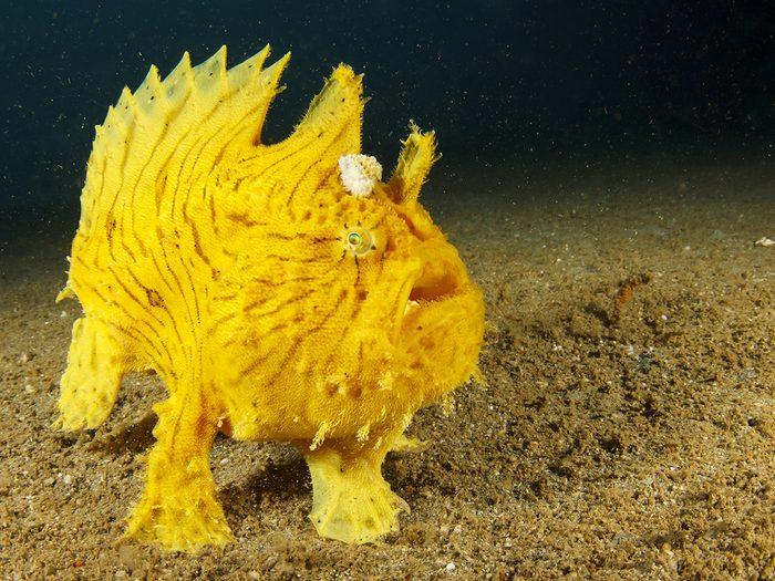 Ocean words - deep sea creature on ocean floor