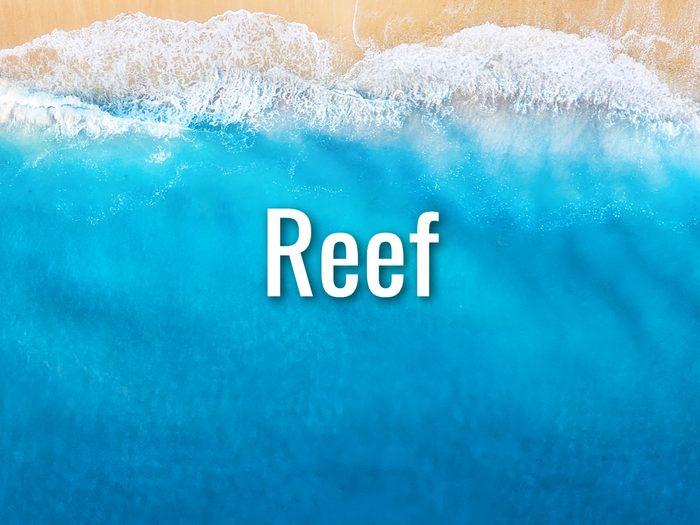 Ocean Words - Reef
