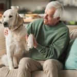 The 15 Best Dogs for Seniors
